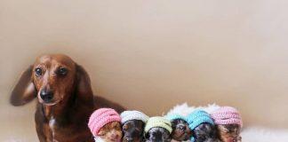cách chăm sóc chó con sinh non